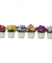 Vensterbank bloemen viooltjes 7 cm trend