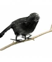 Zwarte decoratieve raaf trend